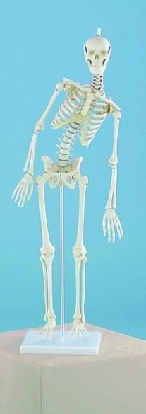 Skelet miniatuur